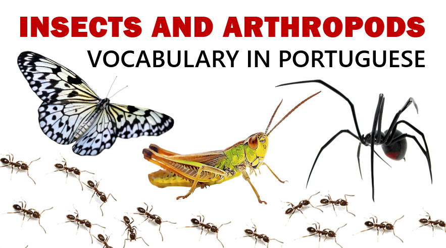 Insects Vocabulary in Portuguese
